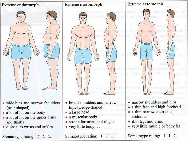 somatotype-myth